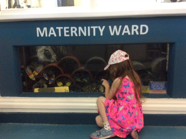 National-Lobster-Hatchery-2016-Aubrey-@-maternity-ward
