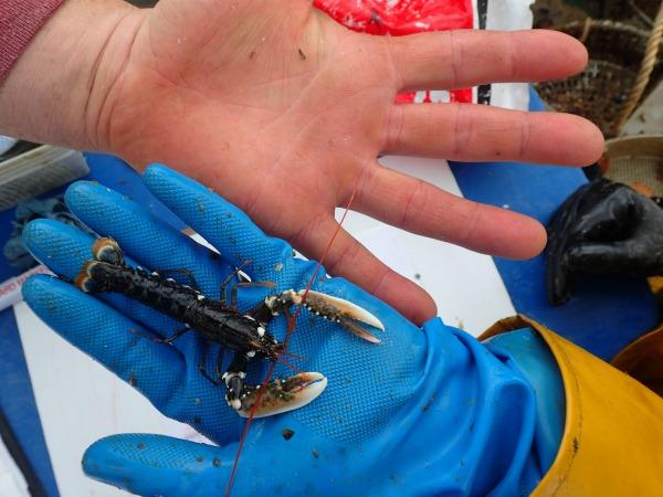 National-Lobster-Hatchery_SA8RT8CR