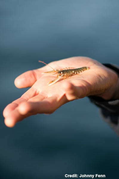 National-Lobster-Hatchery_credit-Johnny-Fenn