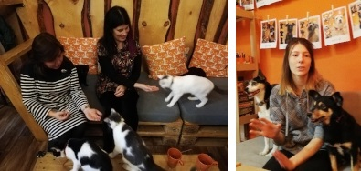 Cat and dog cafes in Siberia