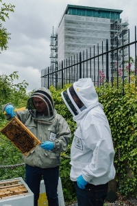 Photo of two beekeepers in protective clothing looking in a beehive